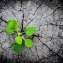 Mindfulness Segunda Mitad de la Vida