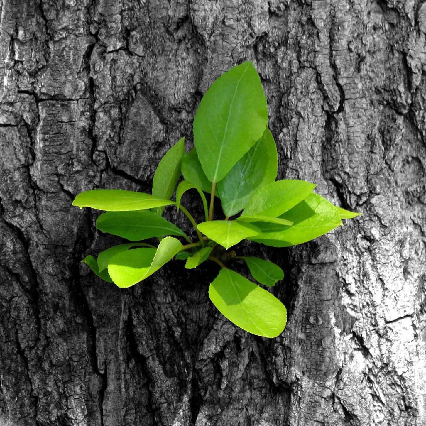 growth1-e1485793250195