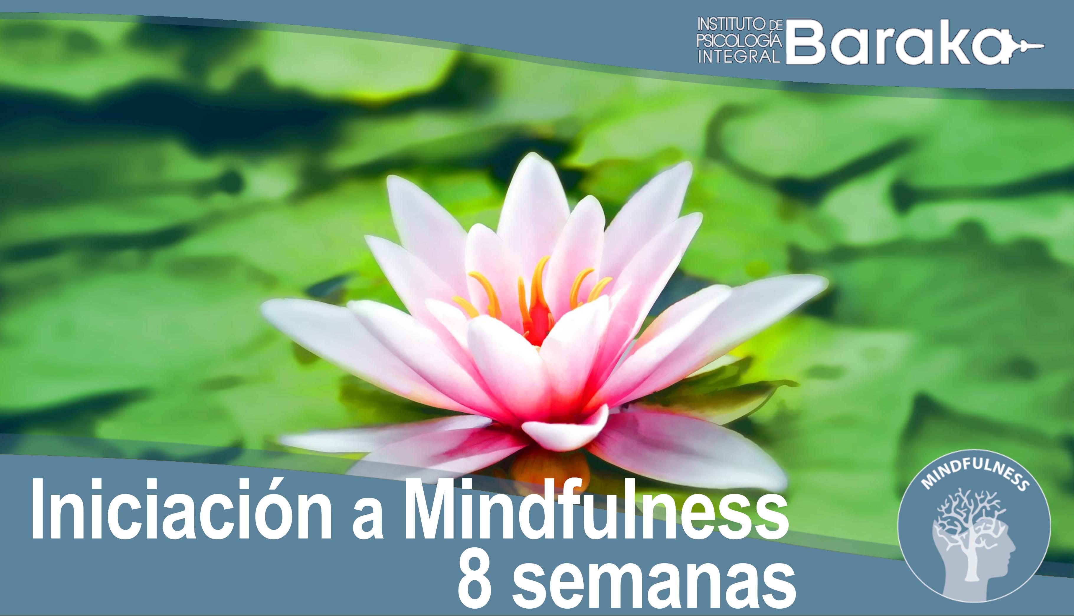 iniciacion mindfulness baraka