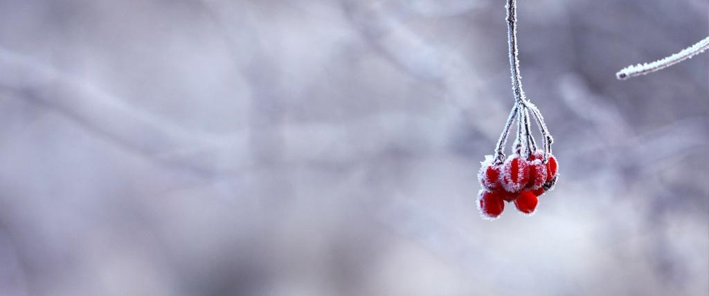 retiros de meditación invierno